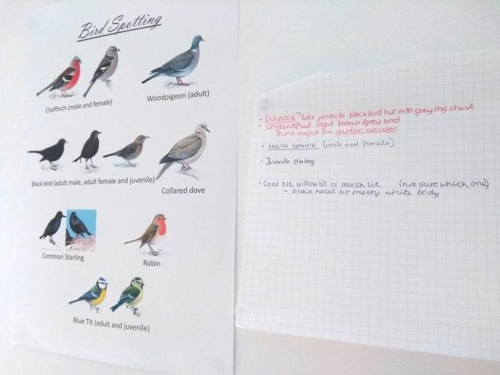 bird P2.jpg