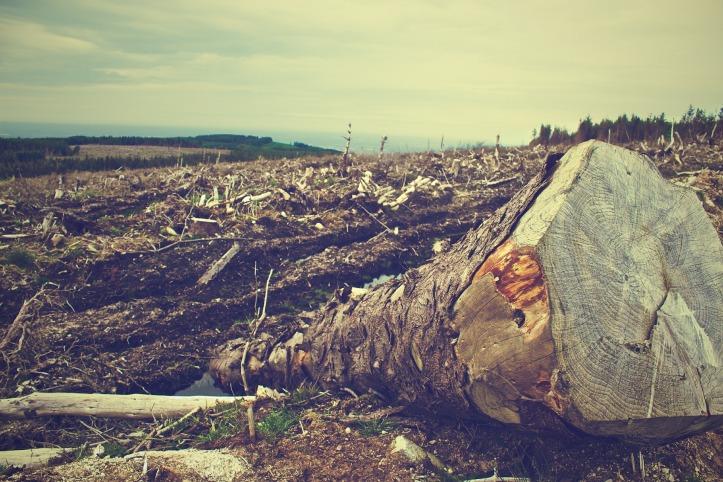 deforestation-405749_1920.jpg