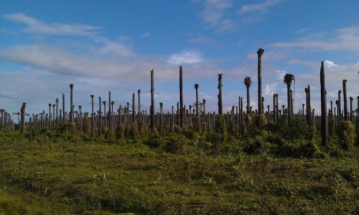 palm-trees-3591430_1920.jpg