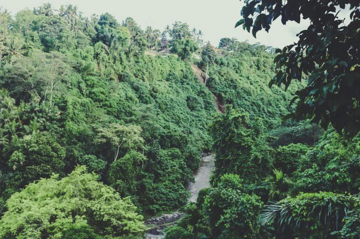 bali rainforest 1