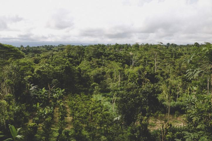 bali rainforest 3